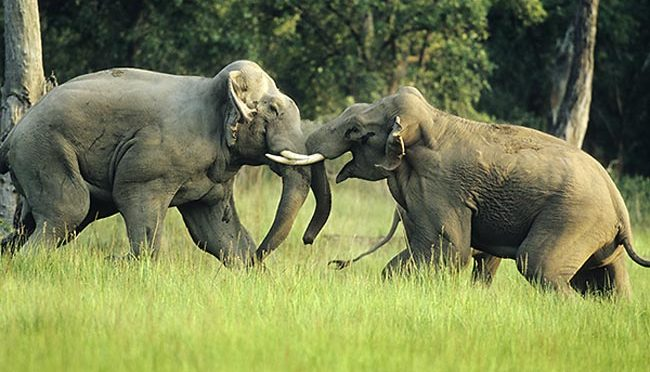 WHEN ELEPHANTS FIGHT, THE GRASS GETS TRAMPLED